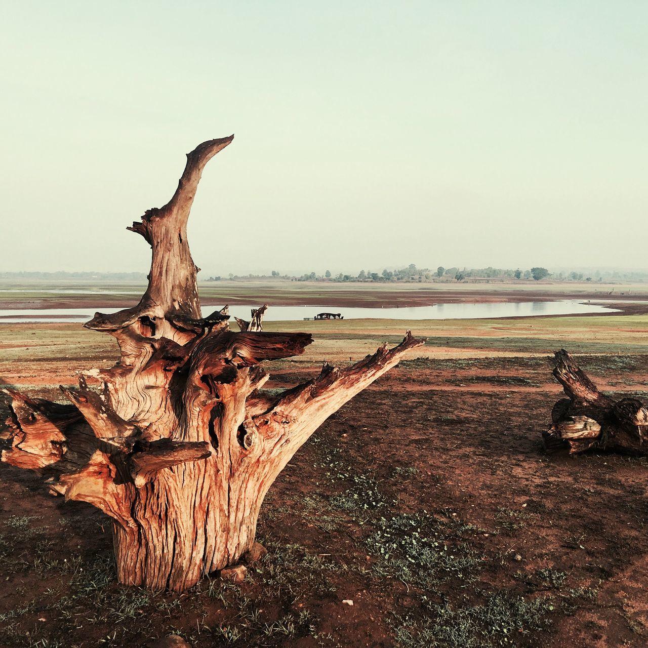 Textured  Vintage Tree Stumps Landscape India Travel NagarholeNationalPark