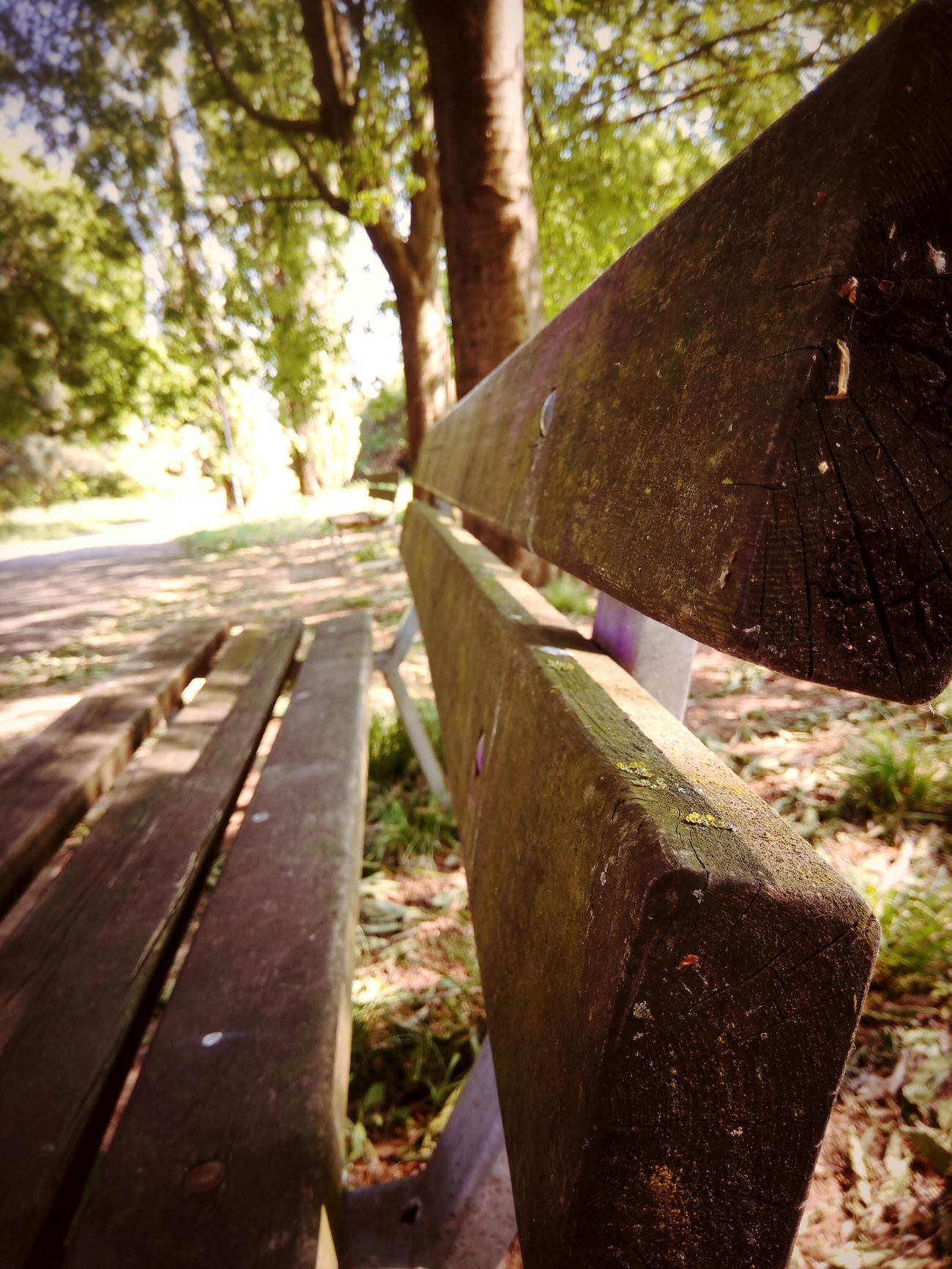 Tree Day Outdoors Nature Tree Trunk Road No People Forest Close-up Park Bench Nature 🌸Nature🌸 Plant Leaf Leaf 🍂 Leafs Leafs 🍃 Green Color Green Verde Foglie Sun Sole