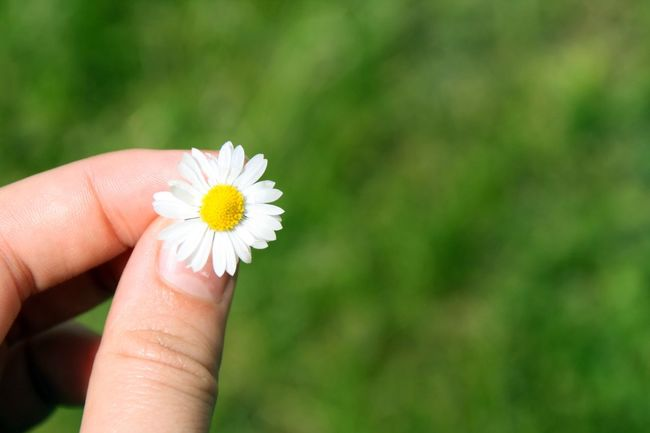 The Essence Of Summer Summer Outside Nature Soaking Up The Sun Enjoying The Sun Earth Nature Photography Flower Flowers Daisy Exploring Little Things Photography Photographer