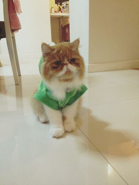 miss cat 😘😘 mymo my love Photos Hi! Hello World Alone Time Cat Missing My Love Animal I Love My Cats  Cat Lovers