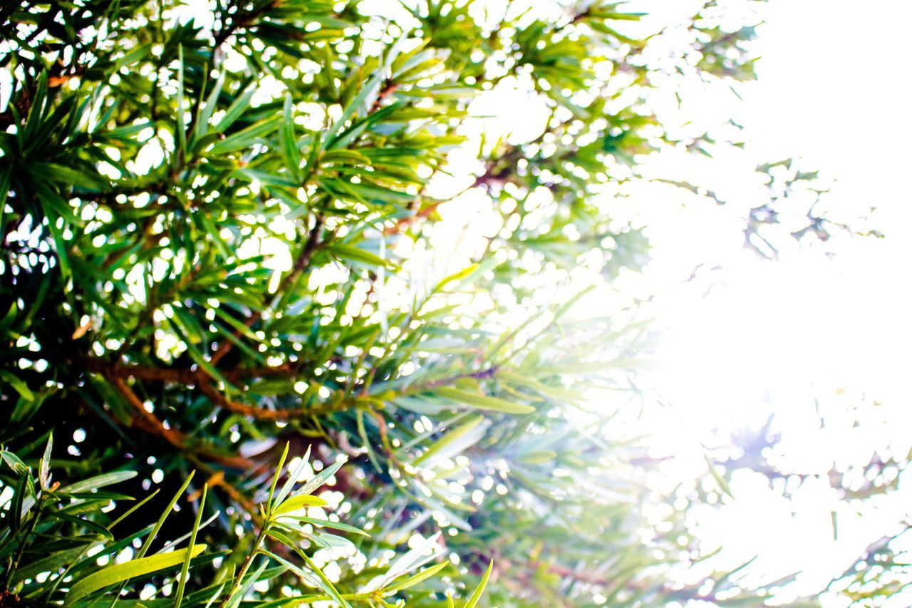 Likeforlike Shadow 八丈島 Hachijojima Photographer Photooftheday Canon Eoskissx7i Nature Photography Nature Open Edit OpenEdit Showcase March Spring Sky Sunny EyeEm Best Shots Hello World Green Relaxing Taking Photos Eye4photography  Check This Out Photography Plants
