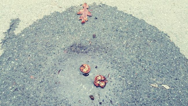 Puddlepicture Wet Crushed Walnuts Taking Photos Check This Out Spontaniouscaptures