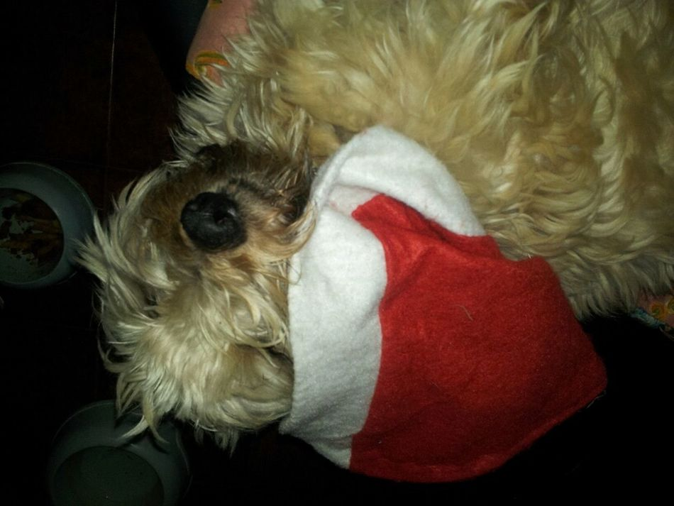 Santa Claus is tired!!! Christmas Natale 2012 Dog
