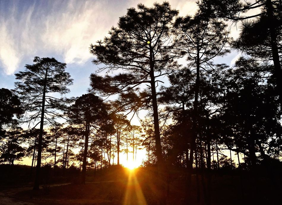 Tree Sky Sunset Nature Sun Sunlight No People Beauty In Nature Outdoors Tranquility Sunbeam Scenics Silhouette Cloud - Sky Day Forest Coppercanyon