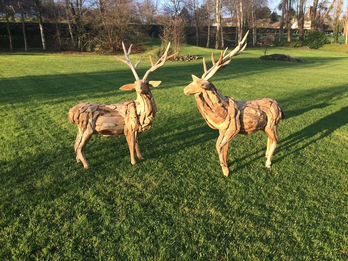 Grass Animal Themes Mammal Full Length Field Tree No People Day Nature Outdoors