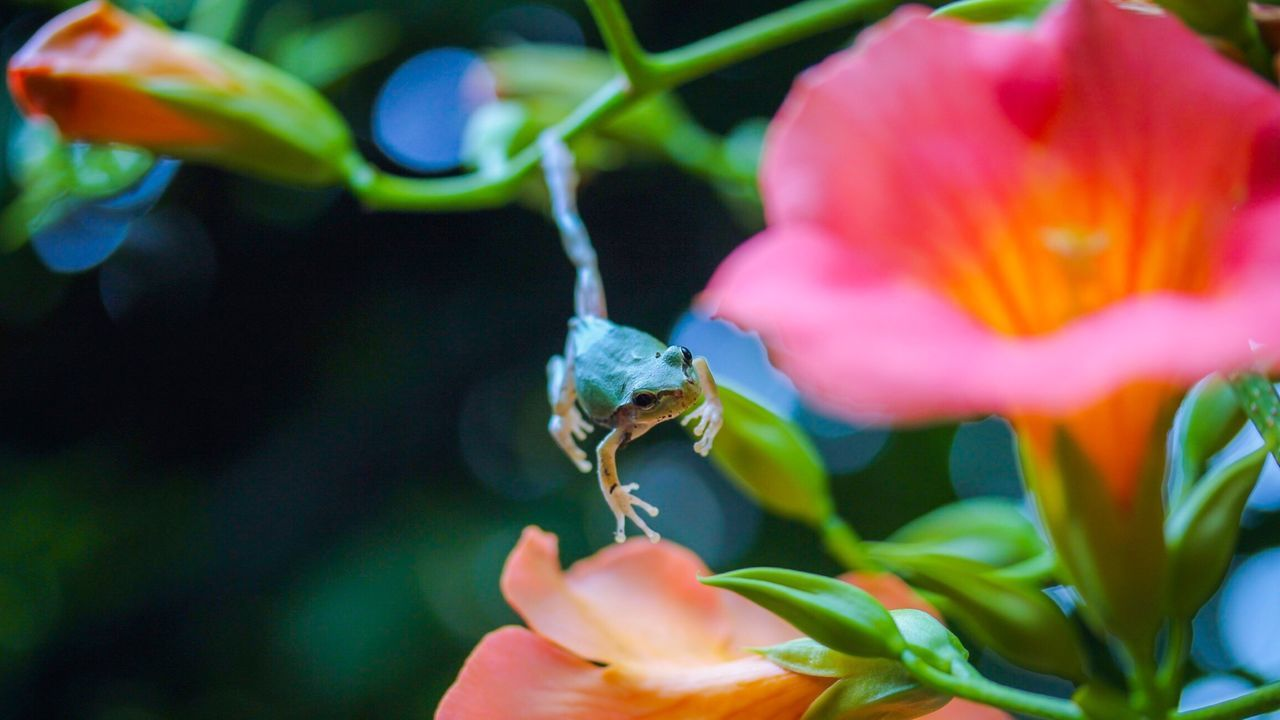Beautiful stock photos of macro, Amphibian, Animal Themes, Animals In The Wild, Beauty In Nature