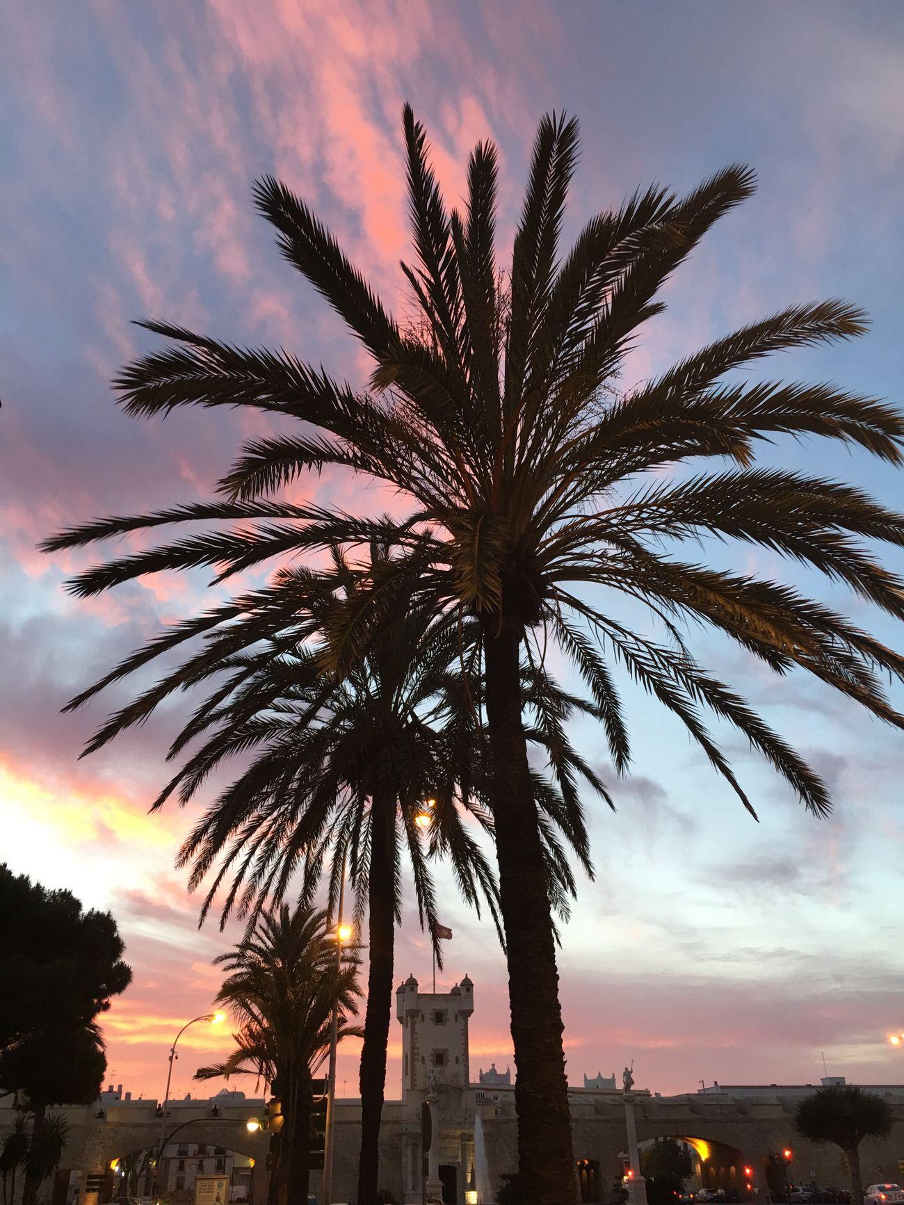 Palm Palm Tree Sunset Sky Colors Colours Colorful Palms City Cadiz