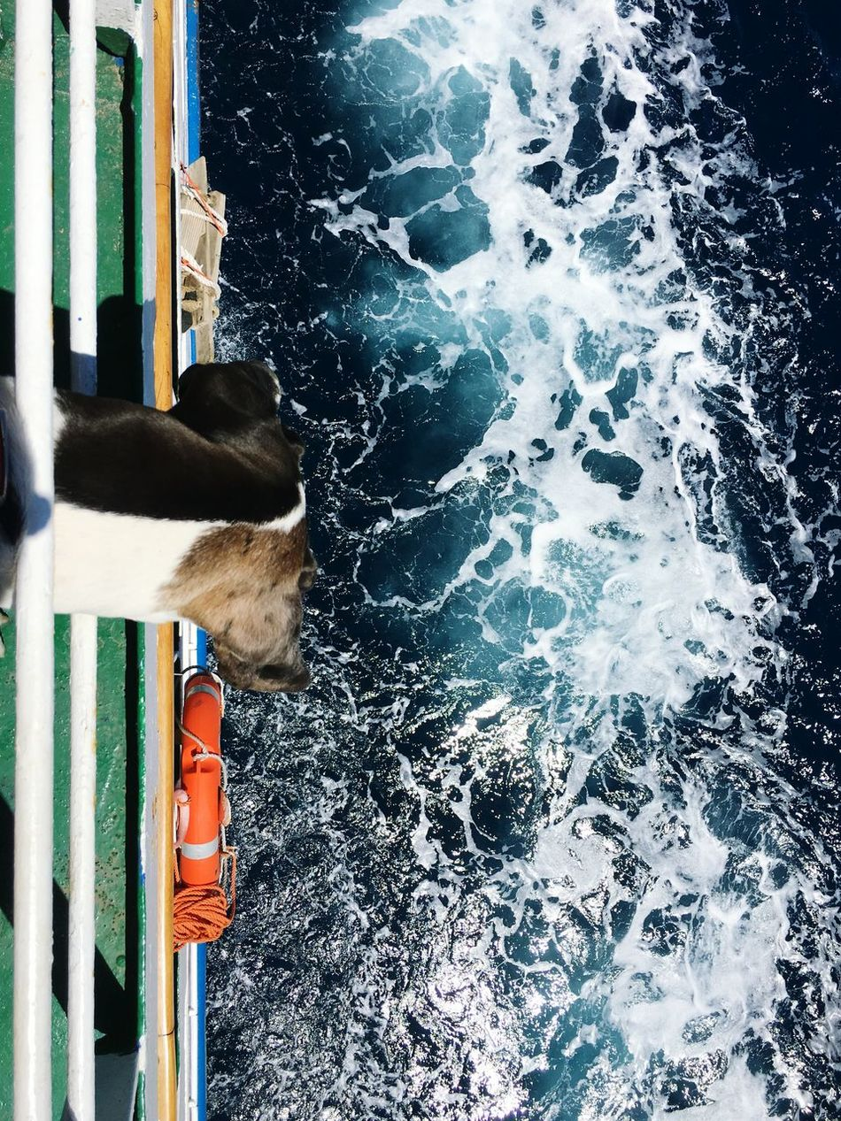 Travel Landscape_Collection Water Sea Beauty In Nature Side View Pets Dog Gran Danes Great Dane Puppy Traveling Ship Adventure Buddies My Year My View Miles Away Lamaddalenaisland
