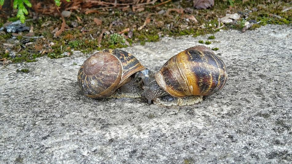 Escargot Escargots🐌 Bisous💋 Kisses French Kiss Mobilephotography Streetphotography Zoomthelife Love Is Everywhere Peace And Love ✌❤ Love Amour Beautiful Nature Slobbery Kisses Snail🐌 Snail ❤ Love Is Everywhere Open Your Eyes Open Your Soul Open Your Heart Street Photo France 🇫🇷 Nature In The City