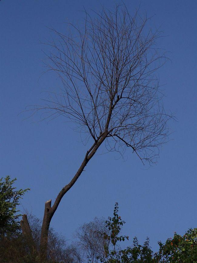 Barren Tree Bare Tree Growth Idyllic Low Angle View Nature Tree Tree Trunk Treetop