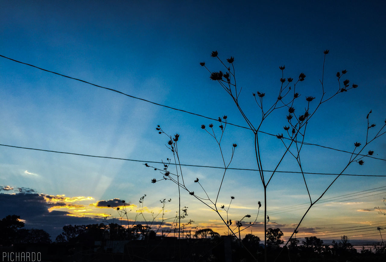 sky, silhouette, nature, beauty in nature, sunset, outdoors, no people, low angle view, blue, cloud - sky, scenics, growth, large group of animals, animals in the wild, tree, animal themes, architecture, day, bird