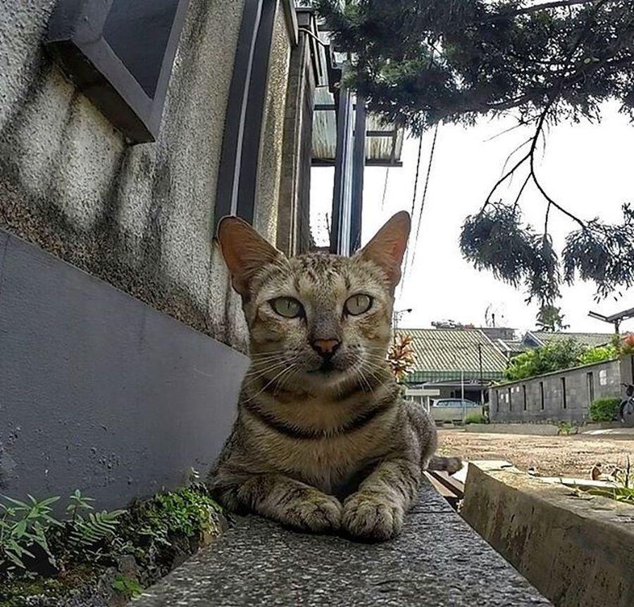 Animal Cat Val  2016 Gopro Gopro3plus Goproblackedition Goproeverything Gopro4life Gopro_moment Gopromoment 😚