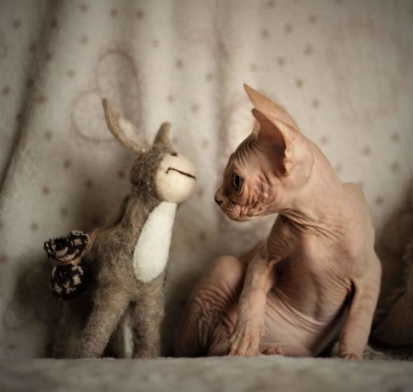 No People Animal Themes Mammal Outdoors Cute Sphynx Nature Animal Sphynxportrait Sphynxlove Young Animal Animal Body Part Cat Sphynx Cat Close-up Domestic Animals Indoors  Pets Portrait One Animal Front View
