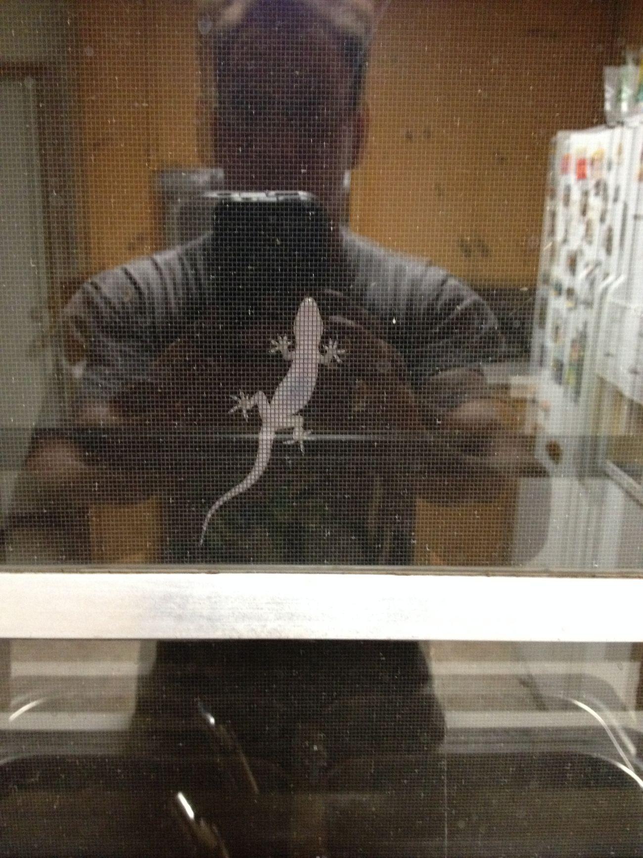 Underside of a large lizard