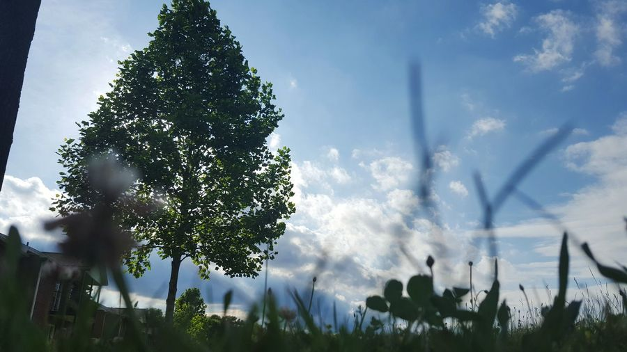 Trees Clouds Grass Beautiful Nature Photography Up Veiw Looking Up On The Floor