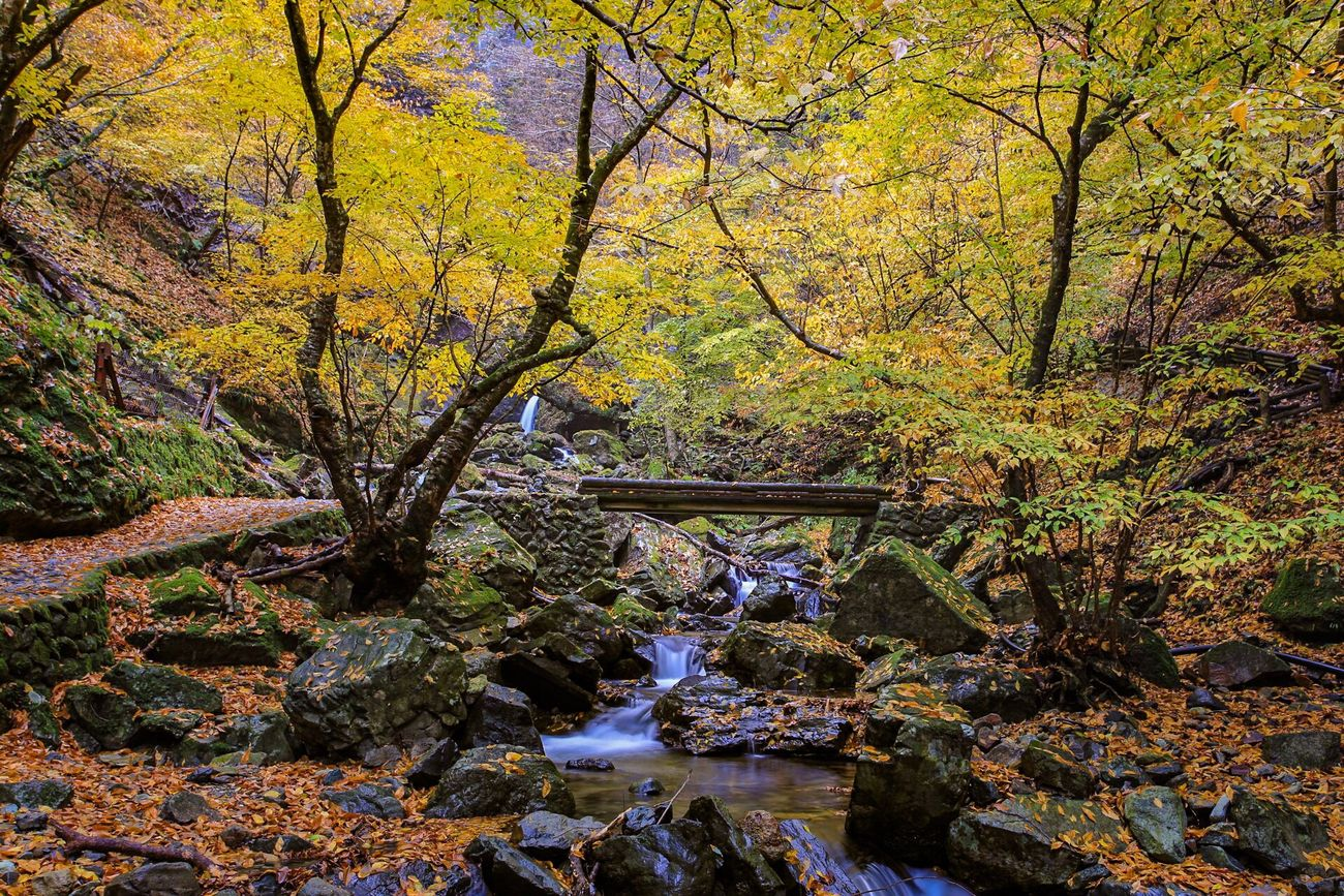 那須塩原の紅葉 滝 水辺 紅葉 那須塩原 名所 秋 Autumn Leaves Waterfall Waterside Points Of Interest Japan Close-up It's Beautiful Countryside Hot Spring Village 温泉郷 遊歩道 Promenade