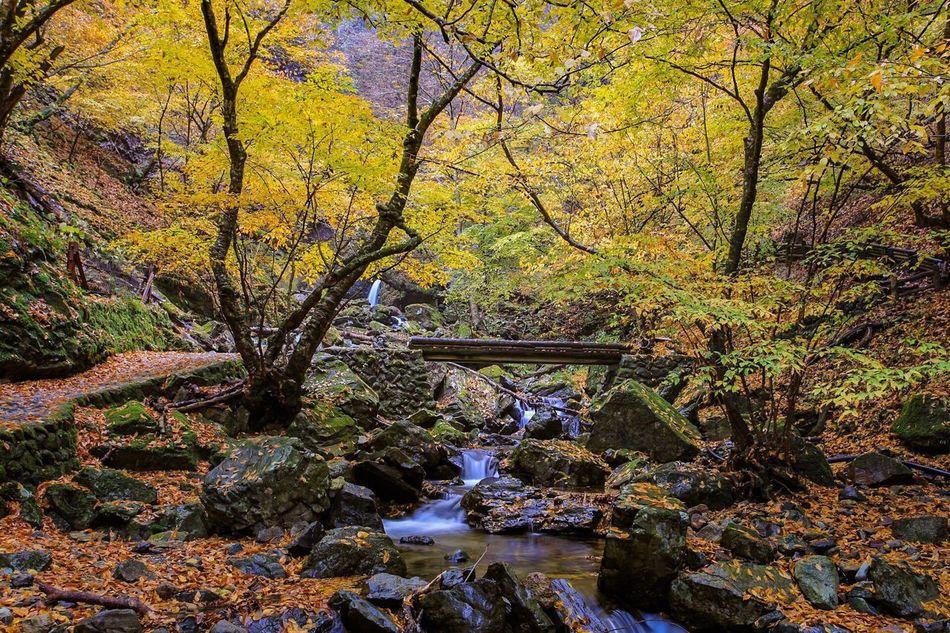 那須塩原の紅葉 滝 水辺 紅葉 那須塩原 名所 秋 Autumn Leaves Waterfall Waterside Points Of Interest Japan Close-up It's Beautiful Countryside Hot Spring Village 温泉郷 遊歩道 Promenade