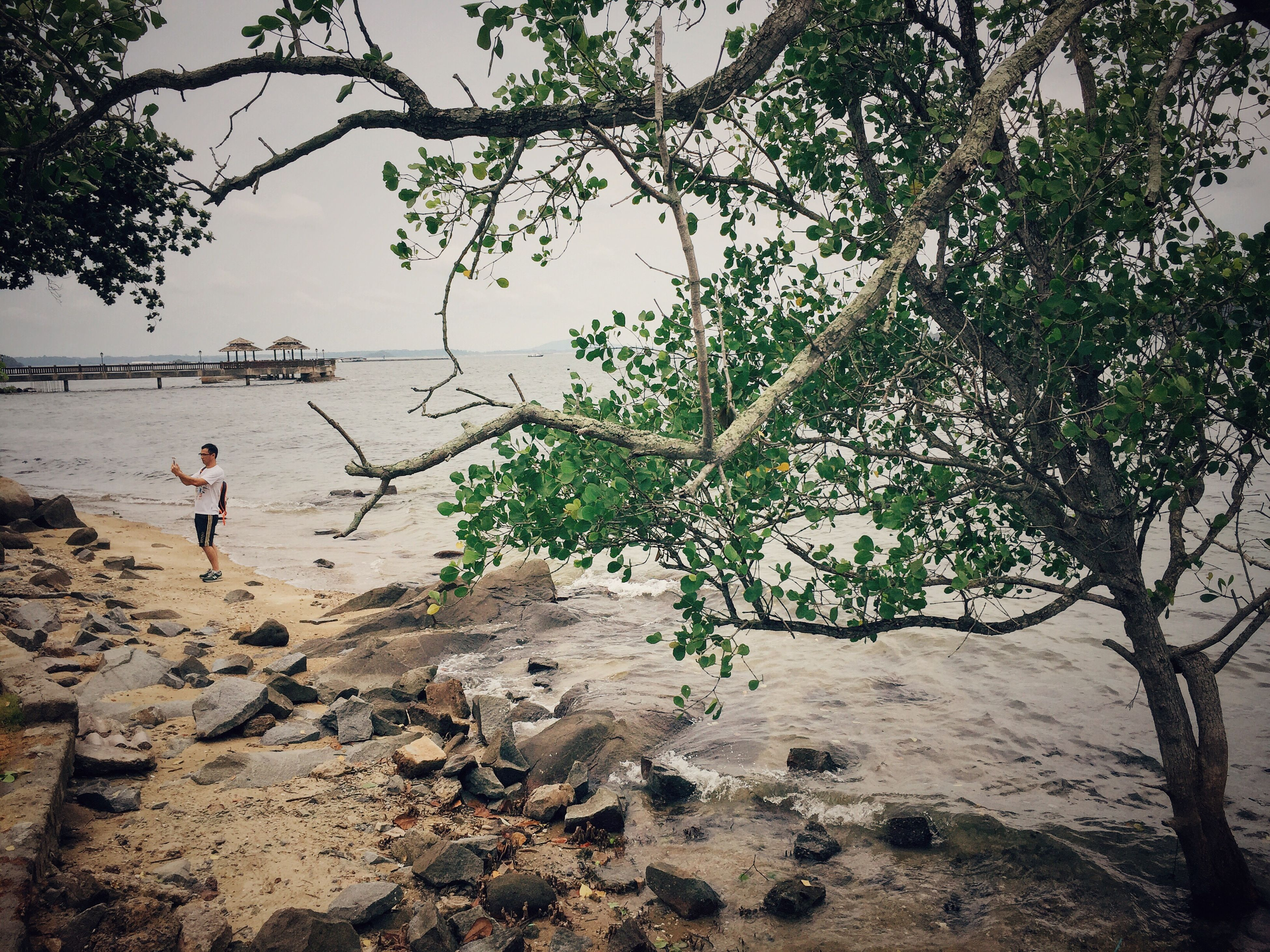 tree, beach, lifestyles, leisure activity, water, sand, nature, tranquility, vacations, tranquil scene, beauty in nature, day, scenics, shore, outdoors, non-urban scene, sea, sky, weekend activities