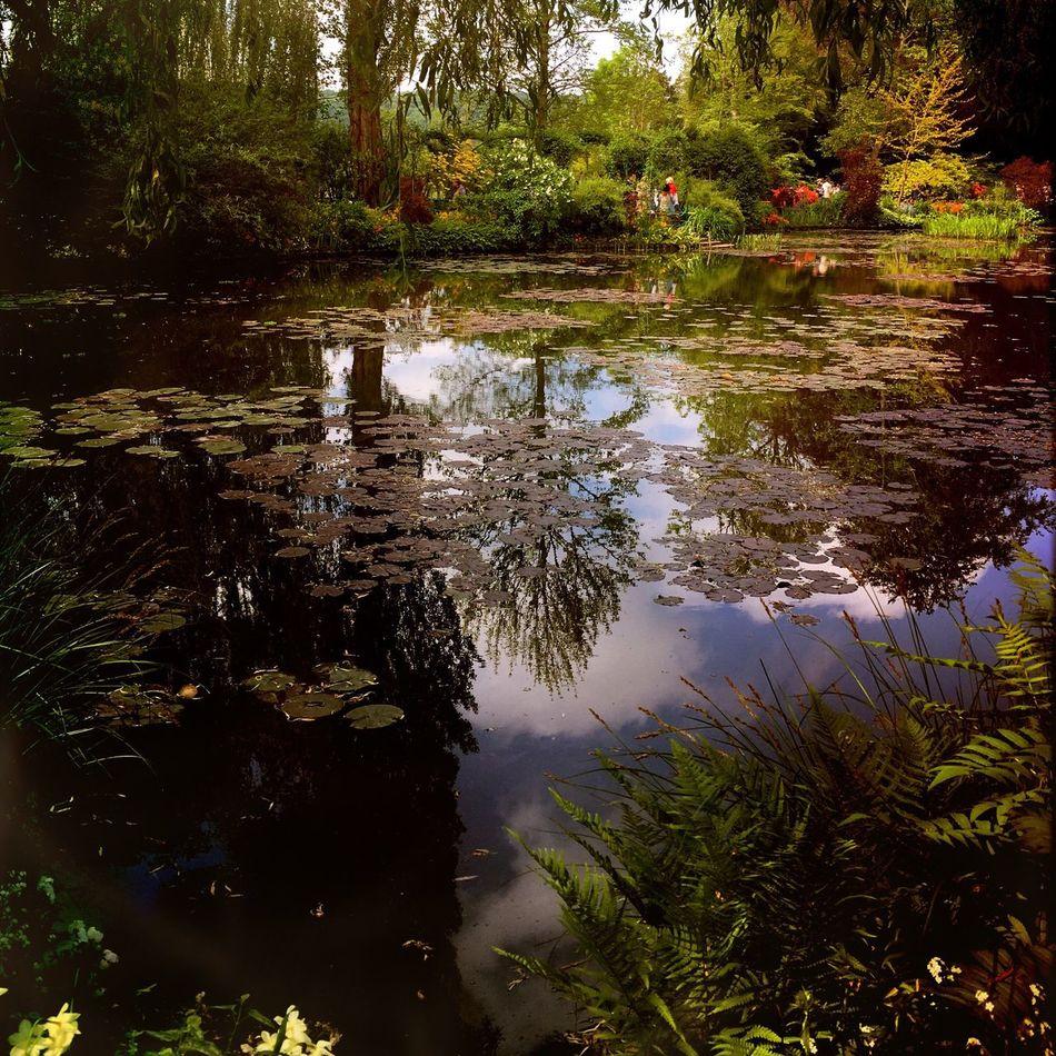 Garden Photography Gardens Countryside Jardin Landscape_Collection EyeEm Nature Lover Monet House Hipstamatic Beautiful