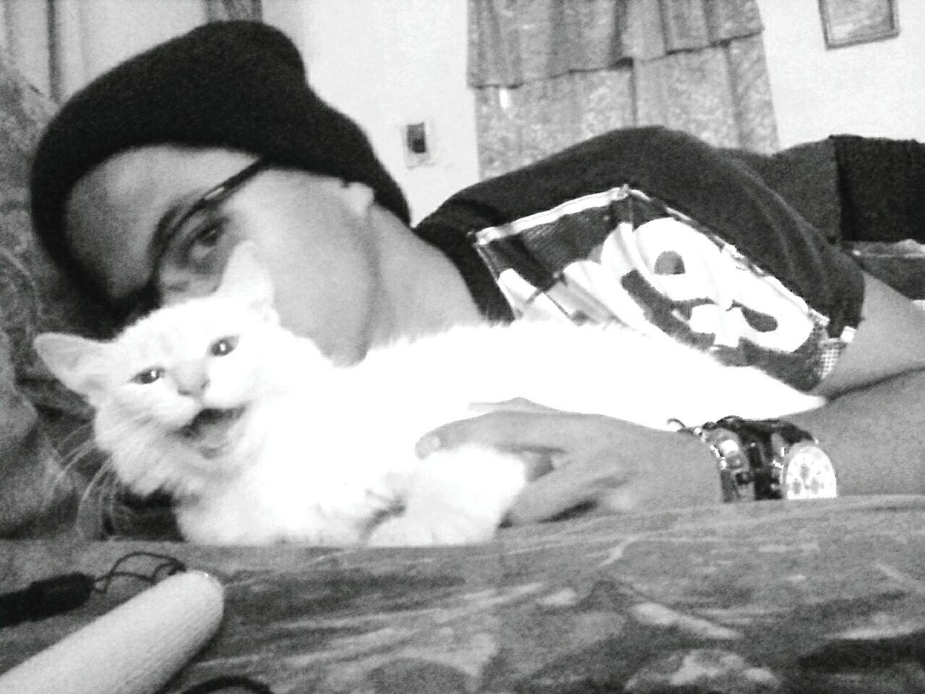 👤😻📷. Taking Photos Cat Followback Good Vibes Blackandwhite Seguime Y Te Sigo