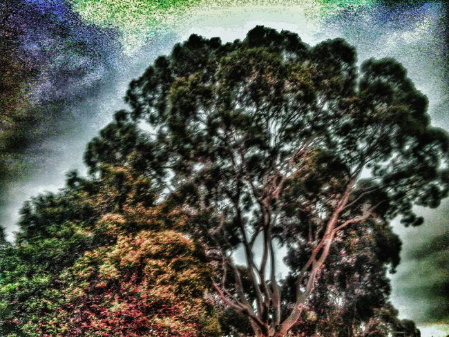 Trees HDR Hdr_Collection HDR Drama Filter