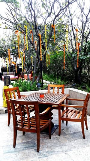 Table Chair No People Empty Tree Wood - Material Bench Dining Table Outdoors Day Nature Trees And Nature Flower Arrangement Furniturepornography Furniture Iraqi Style Trees Collection Hotels And Resorts Furniture Restoration Furnitureandroomallocation