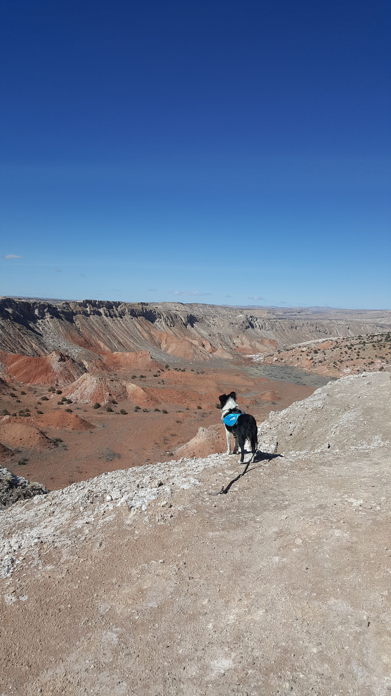 Blue Sky Bike Trail Outdoors Doggy Backpack Doggy Hiking💙 Desert Landscape Beauty In Nature White Mesa Jemez Pueblo Desert Sky Landscape