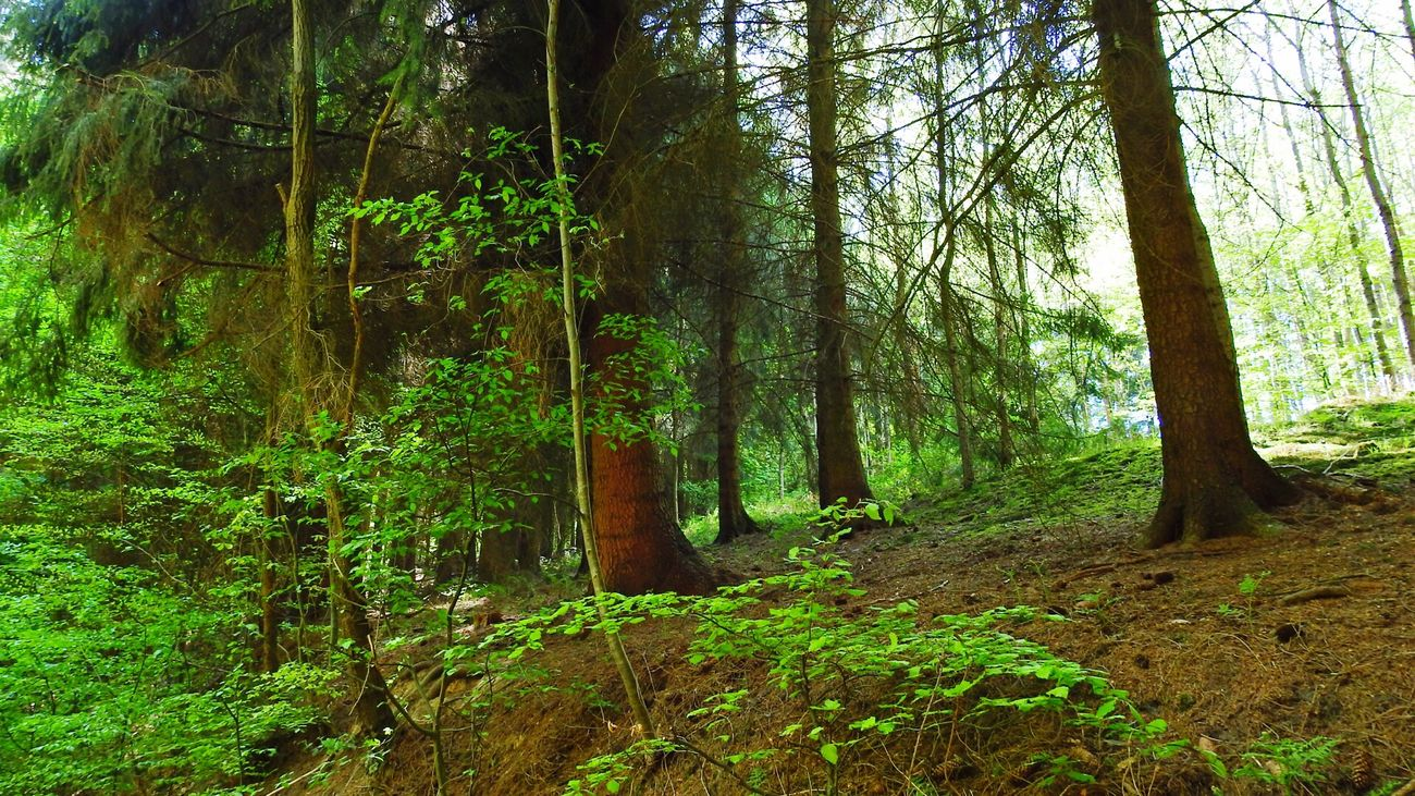 Wald First Eyeem Photo