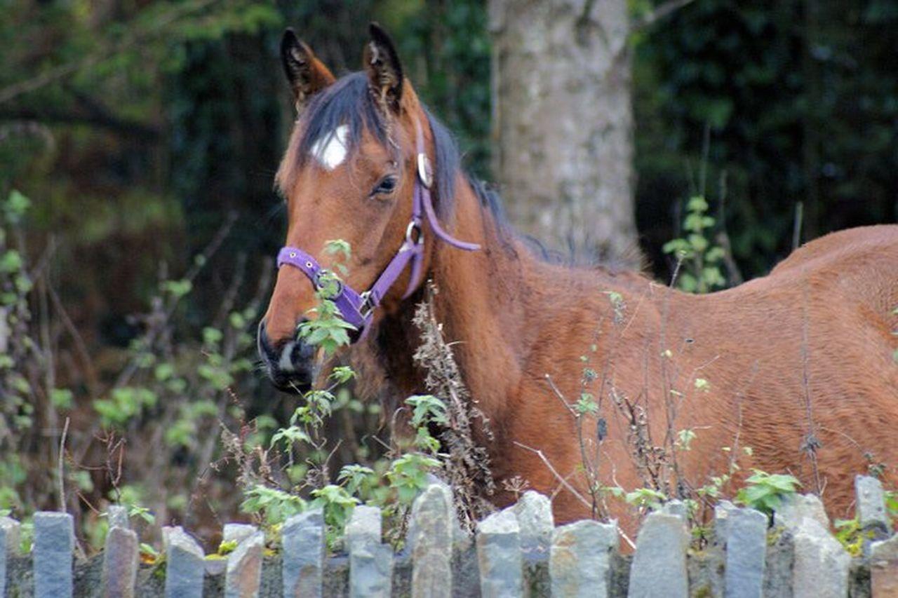 Horse Domestic Animals Animal Themes Animal