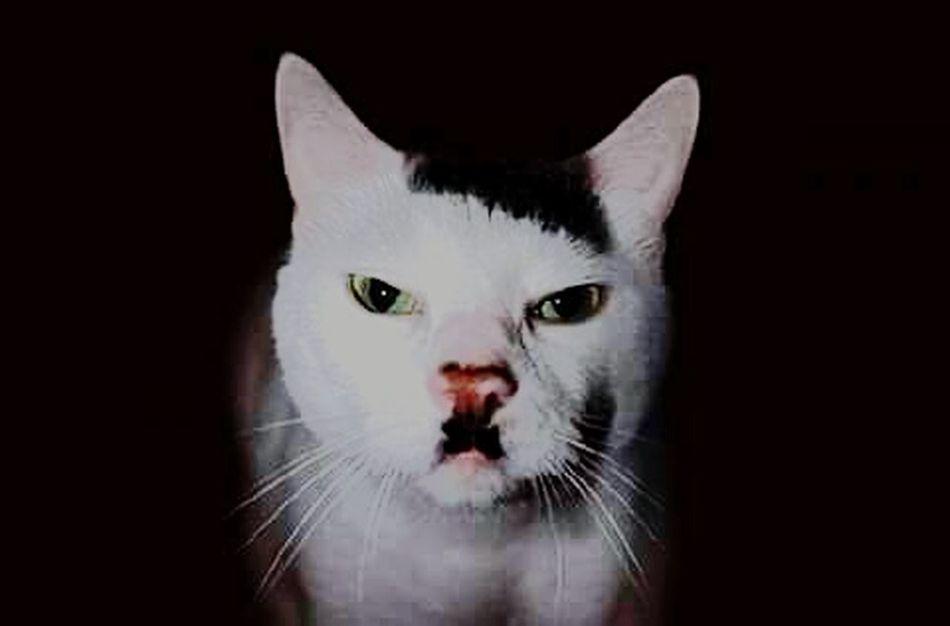 Hitler's Cat hahaha :)