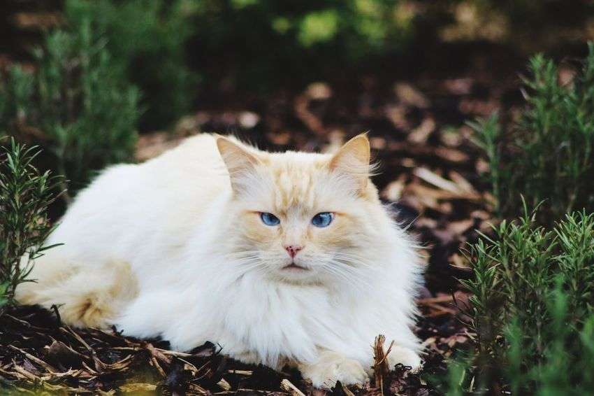 """""""If cats could talk, they wouldn't."""" Nan Porter Domestic Animals Domestic Cat Pets Animal Themes Mammal One Animal Looking At Camera Feline No People Portrait Grass Close-up Day Outdoors Nature"""