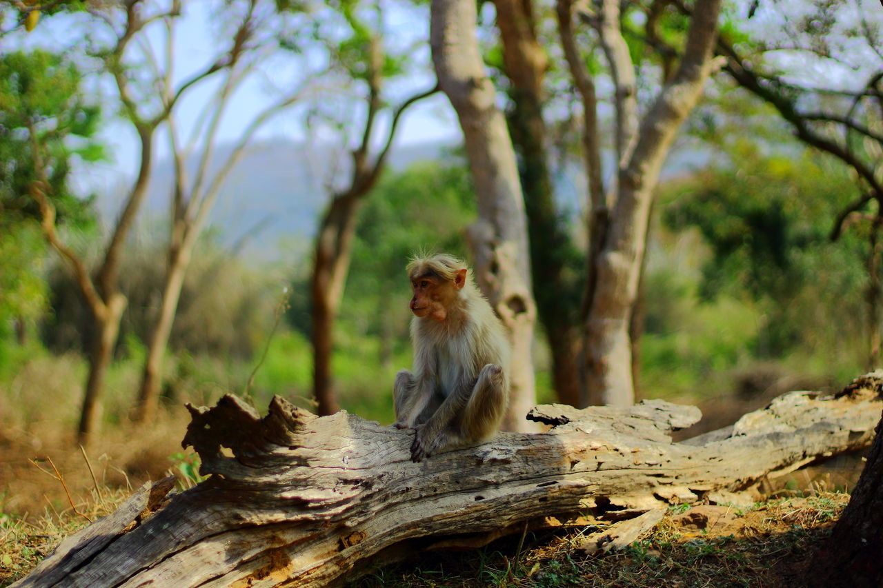Animals In The Wild Animal Wildlife One Animal Nature No People Mammal The Fighter... Animal Themes Wildlife & Nature Animal Photography Nature Beauty In Nature 50mm F1.8 The Great Outdoors - 2017 EyeEm Awards Green Nature Monkey Love