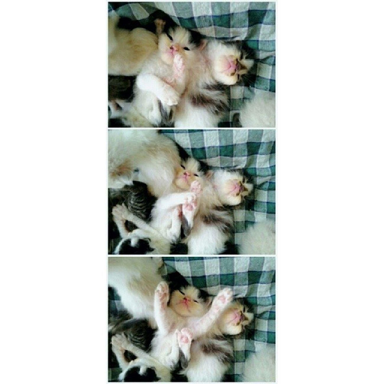 Good morning! Can you hug me? ^_^ Aristacats Kittensofinstagram Kittiesofinstagram Kitty kittycat kitten kucing kot kedici kedi kissa neko gato cat cats_of_instagram catlover igcats igclubcats igmalaysian instakitten instacat meow goodmorning hug
