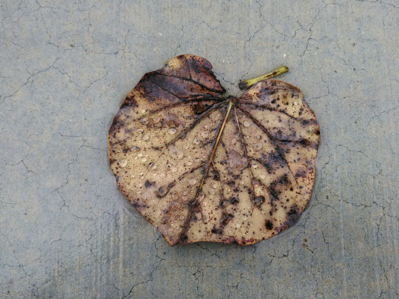 leaf, autumn, high angle view, no people, day, change, close-up, food, outdoors, nature, freshness, maple
