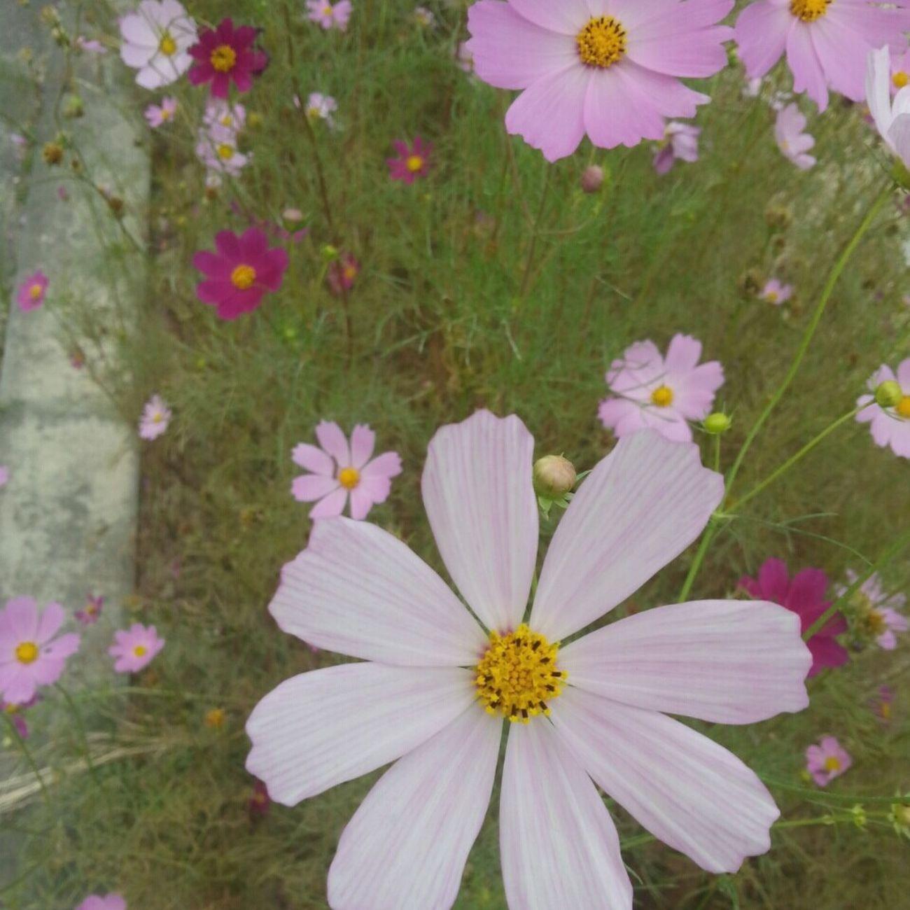 花都开好了。 Beautiful Day Hello World Seoul