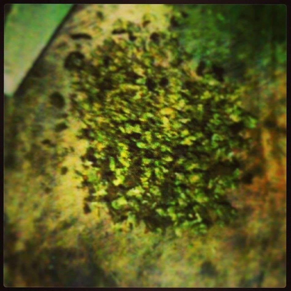 Readyto Smoke