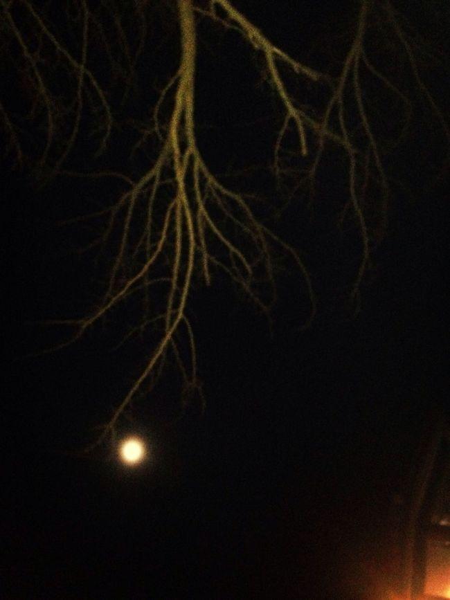 La luna con i rami c'ha qualcosa de mistico Fridaynight Foriperlecarcerettecorino Laschimicadelle1:30 Gnao