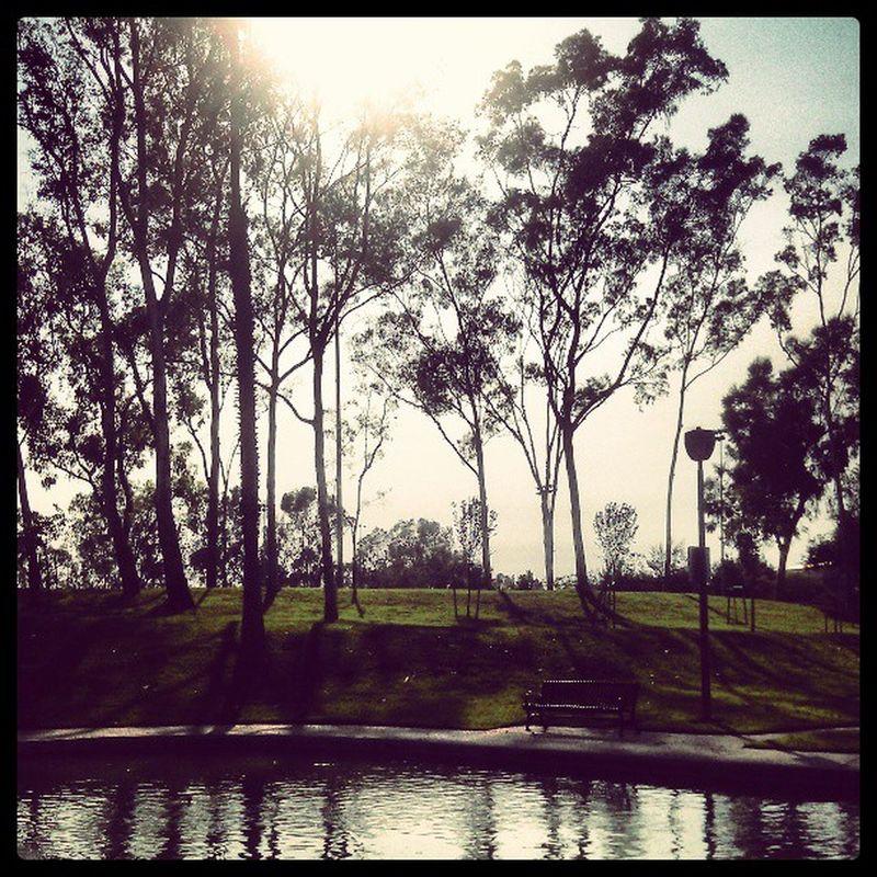 Nice evening Wilsonpark Trees Park Pond