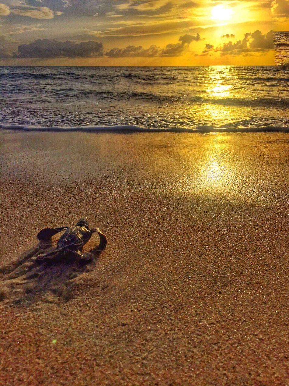 Beautiful stock photos of sonnenaufgang, Animal Themes, Animal Wildlife, Animals In The Wild, Beach