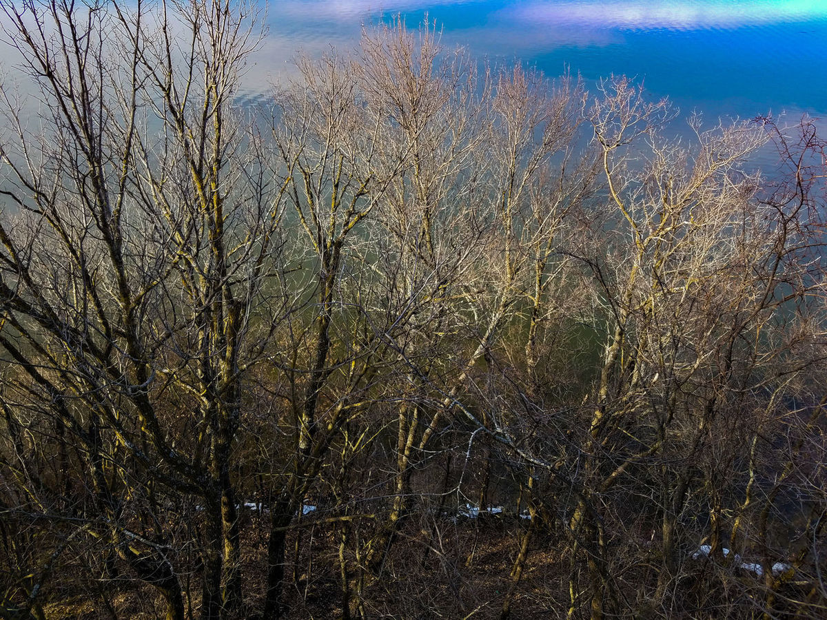 Nature Growth Beauty In Nature No People Water Outdoors Scenics Day Looking Down Above The Trees View From Above Forest Koronis Regional Park Minnesota Bare Trees Spring Springtime March 2017 Lake Koronis Lake Reflection Trees Abstract Lake View Explore