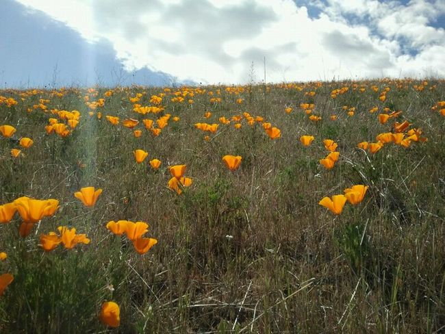 enjoying some quality alone time... Sunolregionalwilderness Having Fun Happy People Hello World Beauty In Nature Smile :) Hey There Check This Out Enjoying Life Taking Photos Nature Makes Me Smile Nature Happy Day Smile California Poppies
