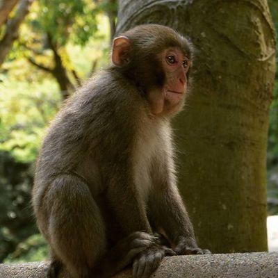 大分 高崎山 コザル 猿 サル おサル