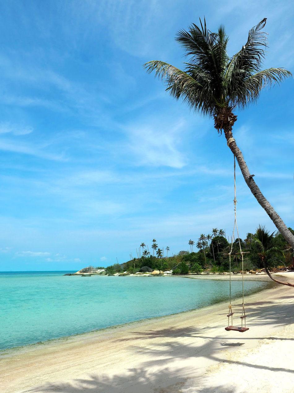 Beautiful stock photos of bangkok, Beach, Beauty In Nature, Branch, Childhood