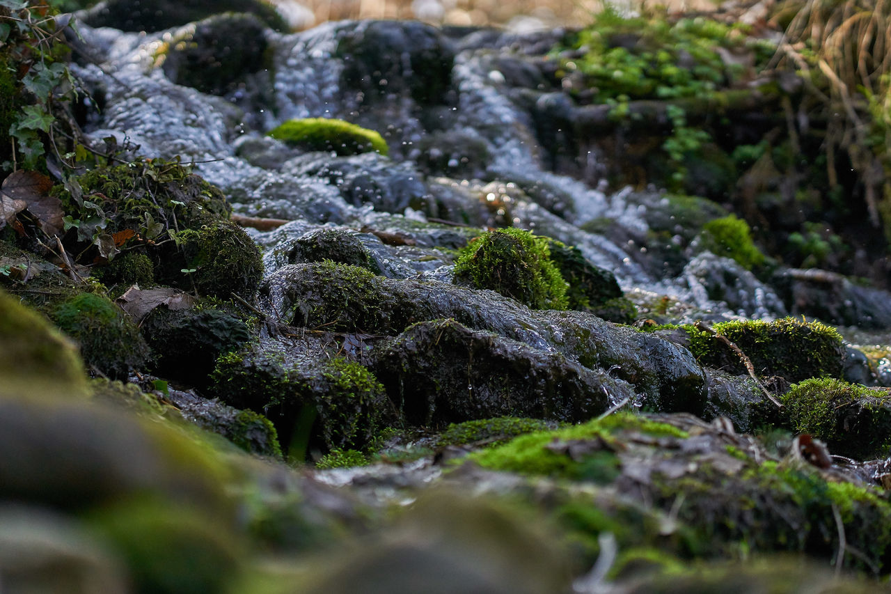 Beauty In Nature Close-up Day Freshness Green Color Moss Nature No People Outdoors Scenics Stream - Flowing Water Tranquility Water Waterfall