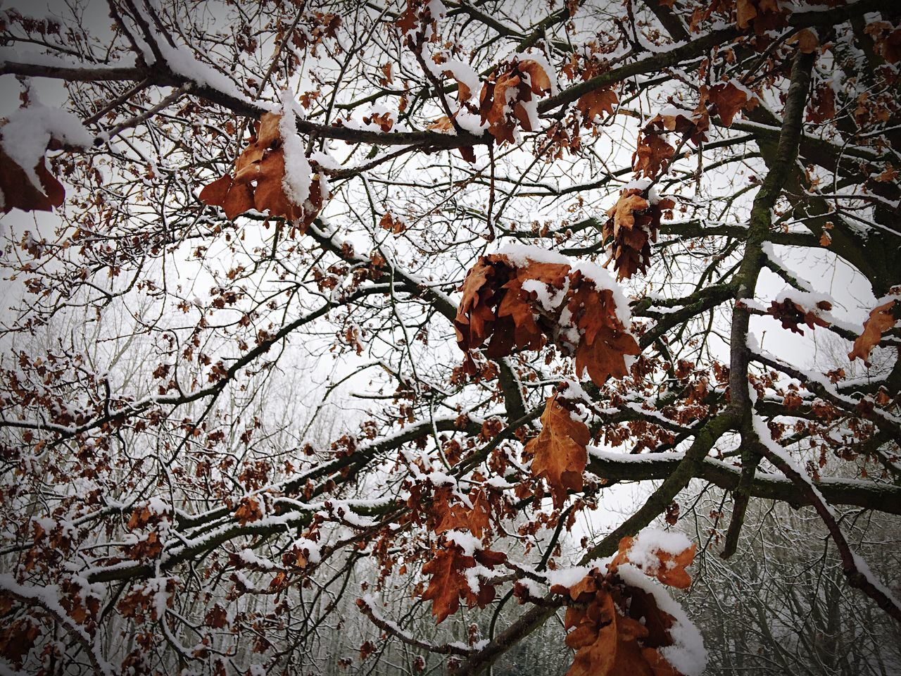 Heavily held the burden when winter snow falls Winter Trees Snow Trees Frozen Leaves Nature Beauty In Nature