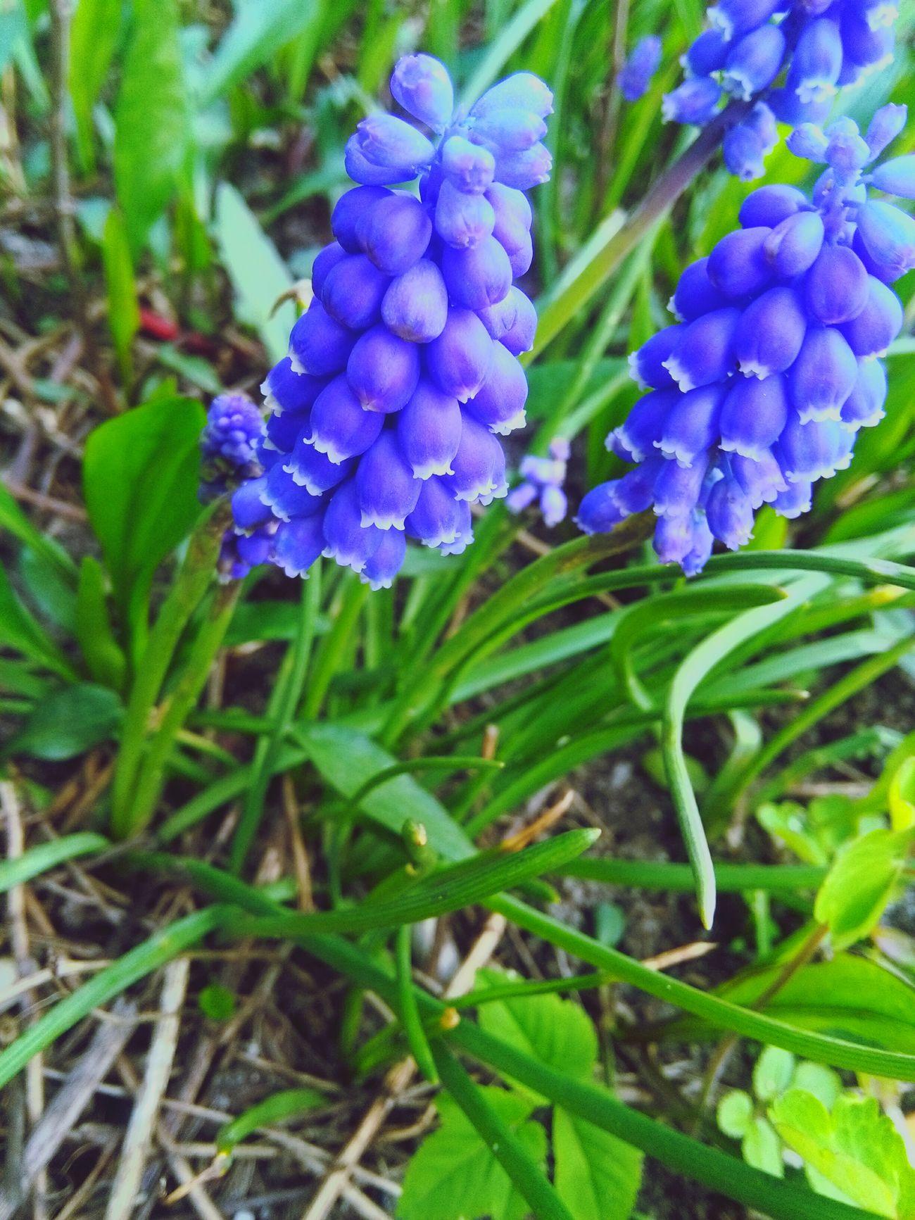 Enjoying Life By Me 👆 Nature Nature Photography Hello World Showcase April MyPhotography Taking Photos