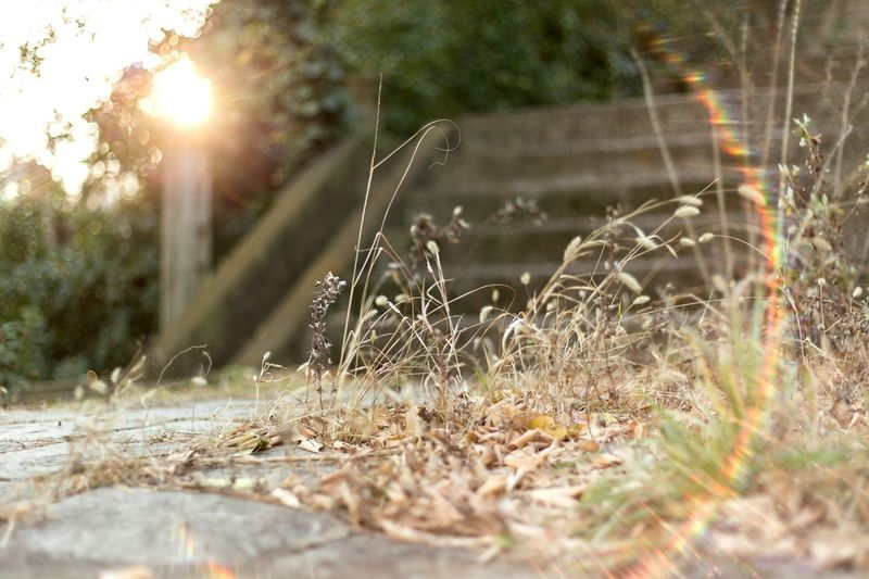 Lens Flare Sun Sunlight Nature Grass Day Outdoors Beauty In Nature Korea Busan Ibagu-gil First Eyeem Photo