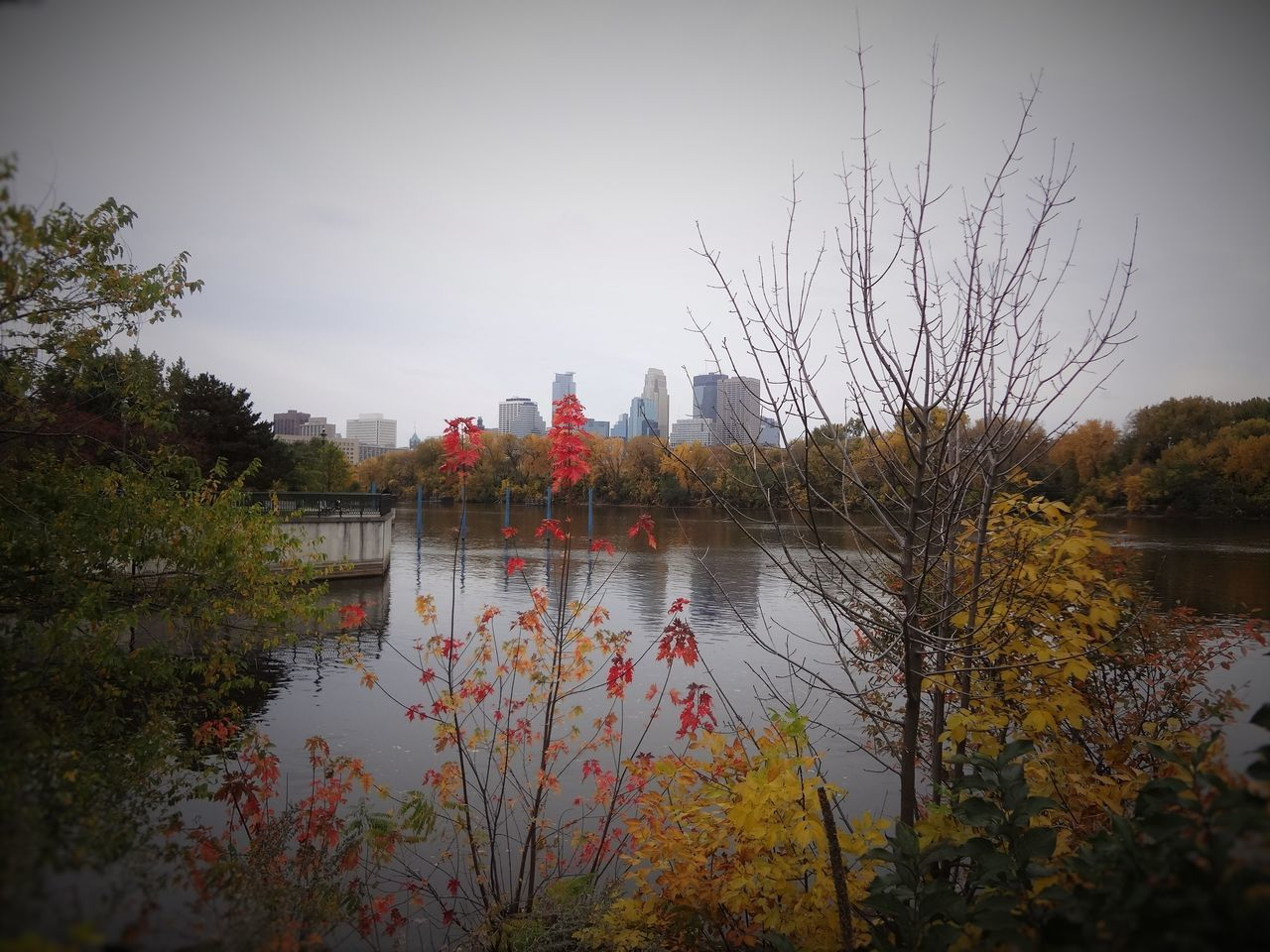 Shot of downtown Minneapolis from Boom Island. Day Fall Fall Beauty Fall Colors Fall Leaves Flag Flower Lake Nature No People Outdoors Red Reflection Reflection Lake Sky Skyline Tabphotography Tree Water Water Reflections