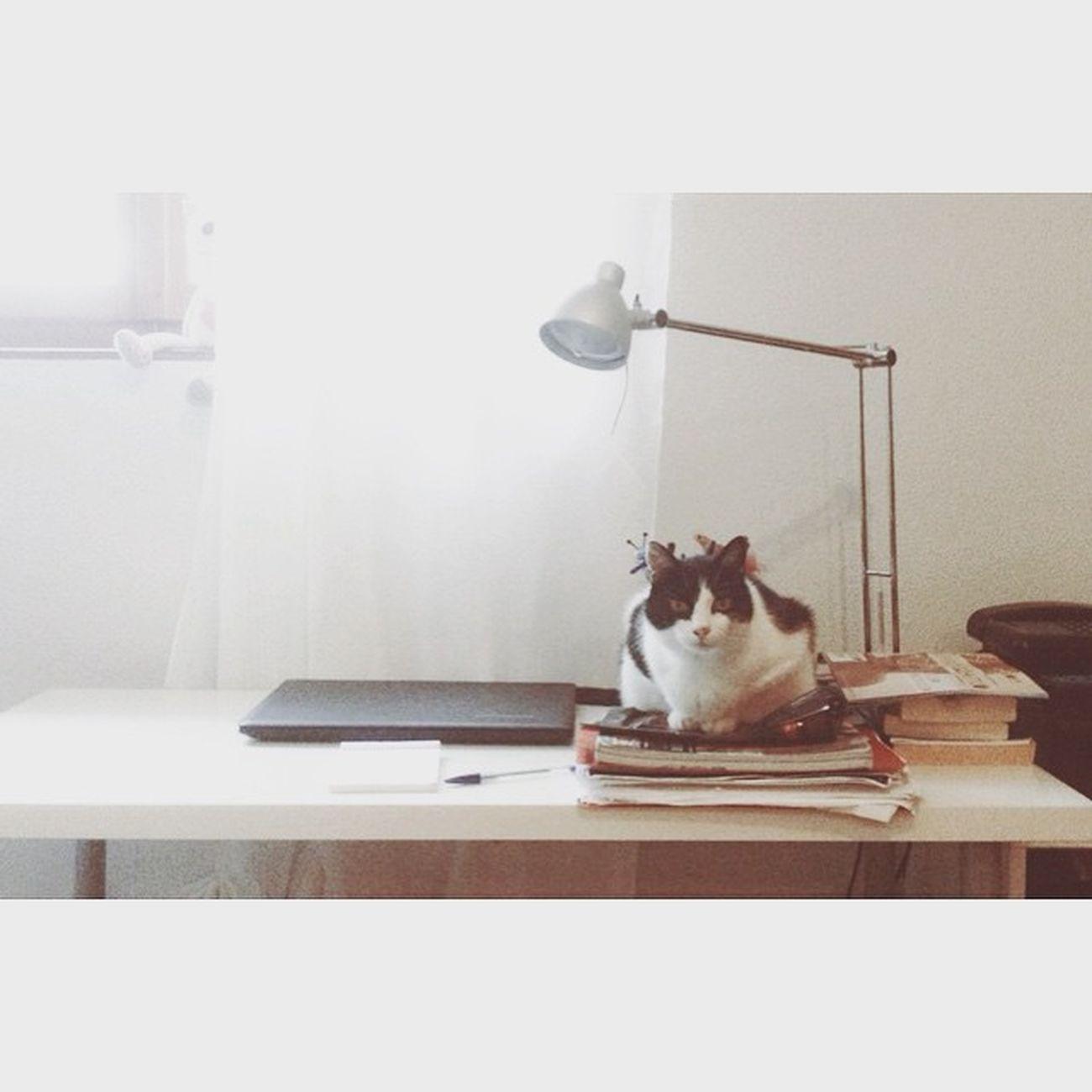 Anche Macchia si diploma quest'anno 📘📚📓😺🐱 Macchia Gatto Cat Pet Books Computer Study Maturande Maturità Instapet Animals Animal Instaanimals Picture Photo Photofday 2K15 Estate2k15 Summer2015