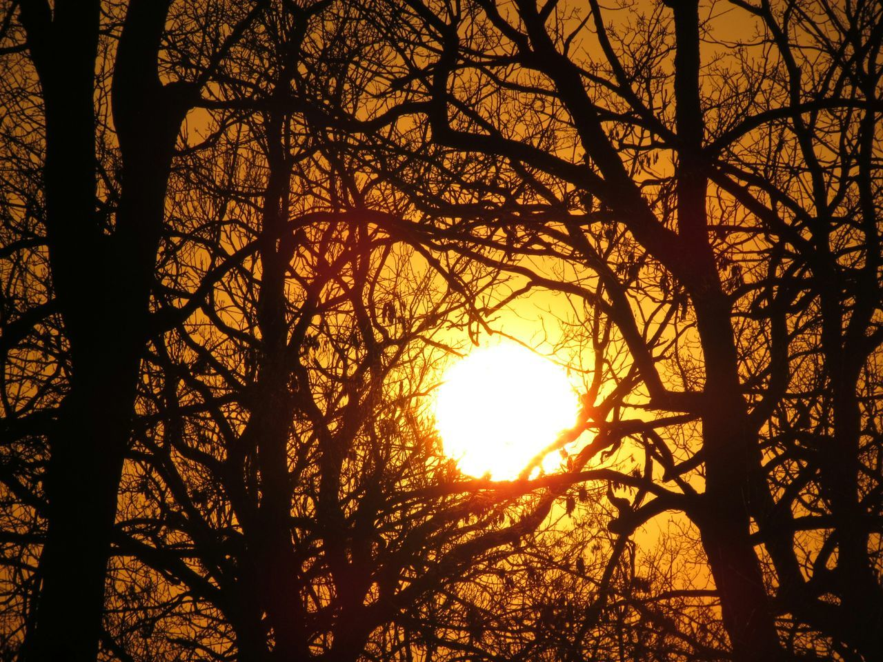 Sun Seen Though Silhouette Bare Trees During Sunset